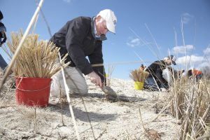 Congressman Joe Courtney, an older white man in a cap, kneels on a dune while planting grasses