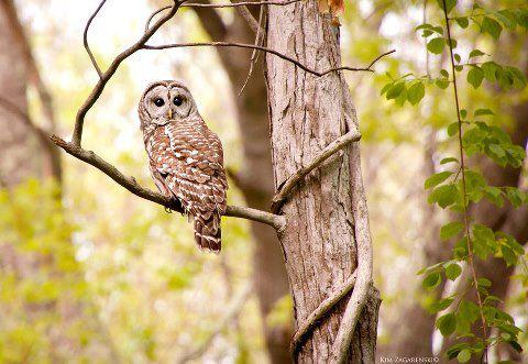 CFE Winner: Kim Zagarenski, Denison Pequotsepos Nature Center in Mystic