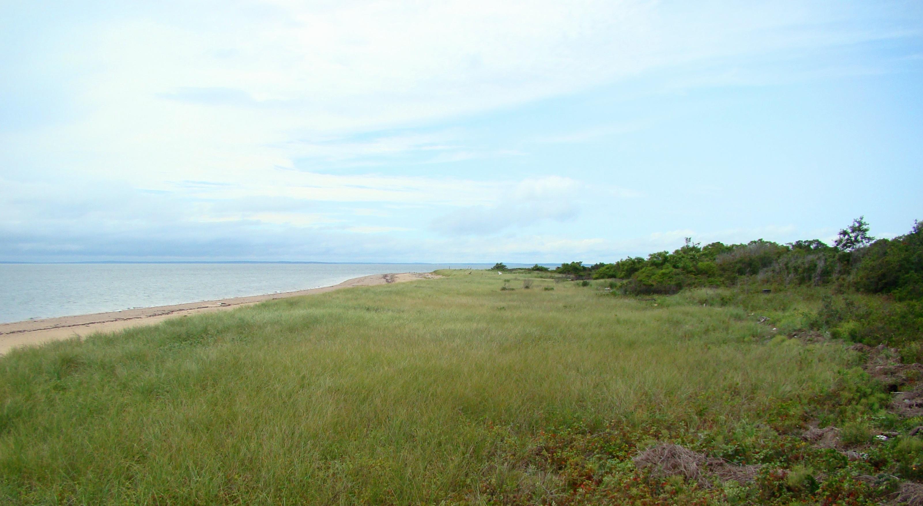 Plum - dune grass