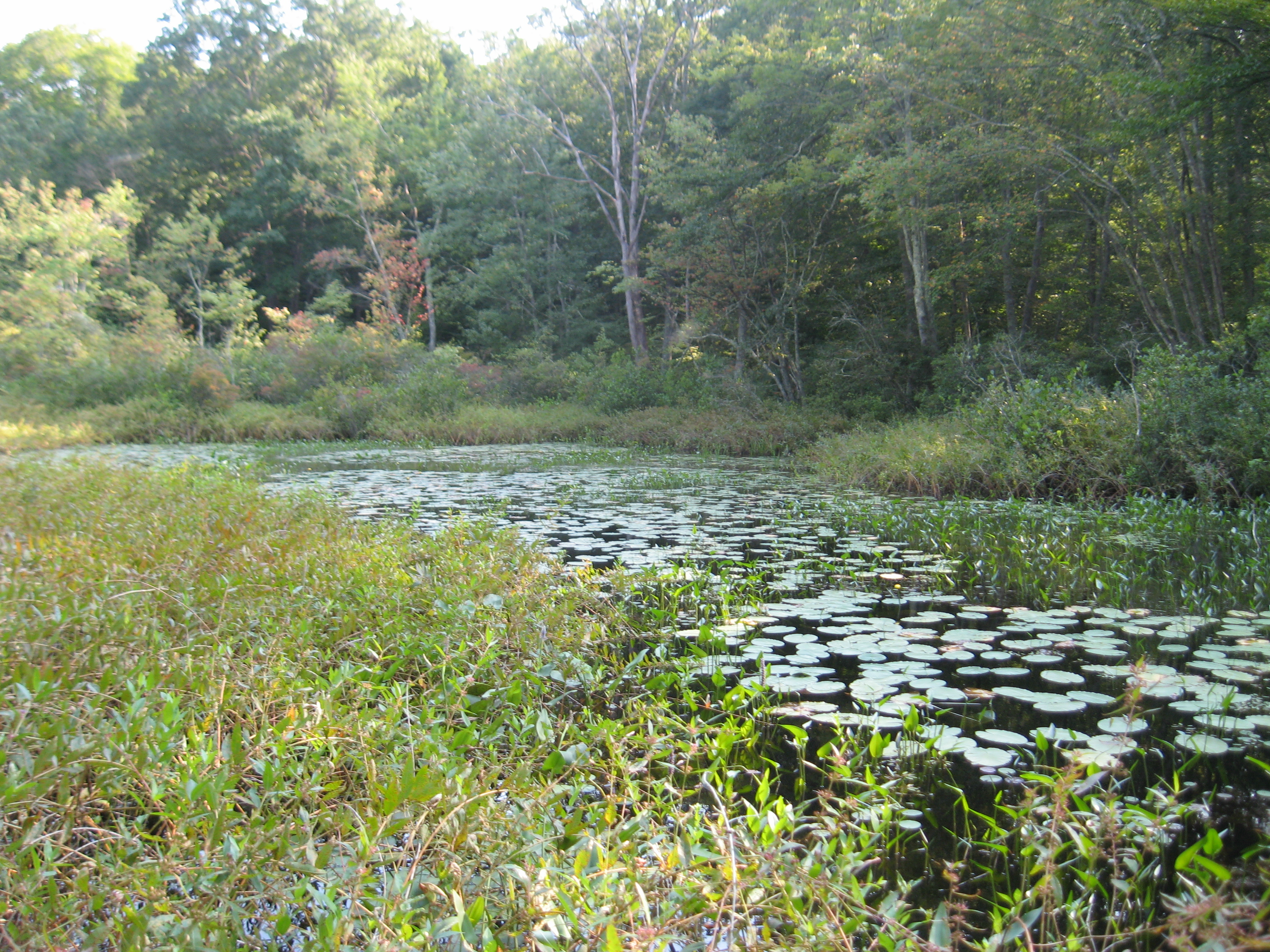 Wetlands in the Essex portion of the Preserve