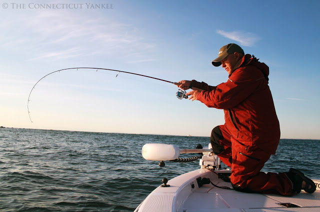 A healthy Long Island Sound fishery is important economically. Recreational fishing on the Sound contributes more than $1 billion a year to the regional economy. Photo courtesy of Kieran Broach/