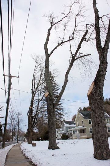 """Enhanced Tree-Trimming"" in Canaan, CT (Photo by Tom Zetterstrom)"