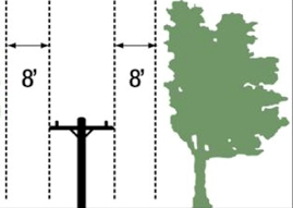 Proposed trimming standard. Image from Garden Club of New Haven