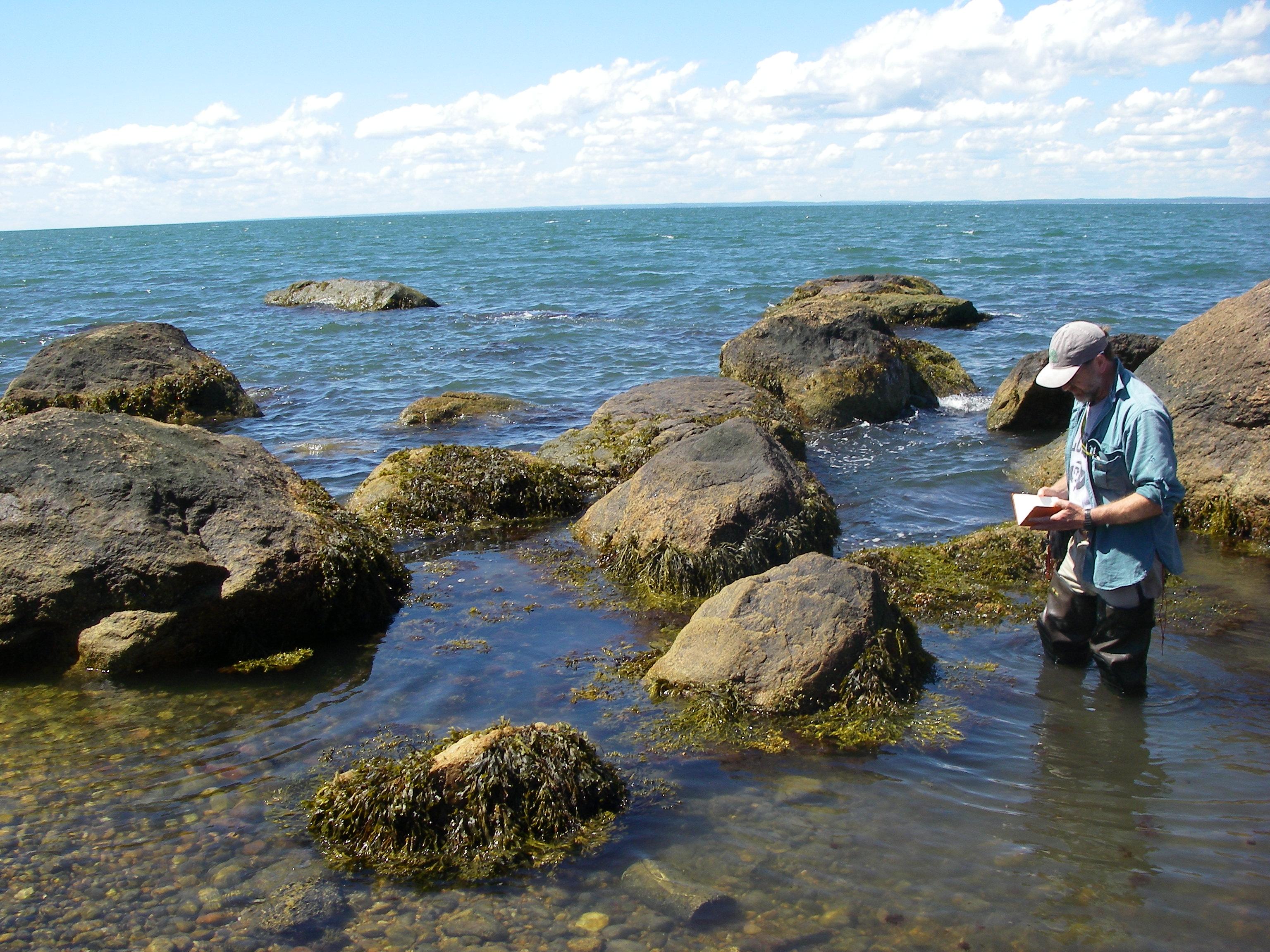 Greg Edinger -Plot in rocky intertidal (photo by Erin White)
