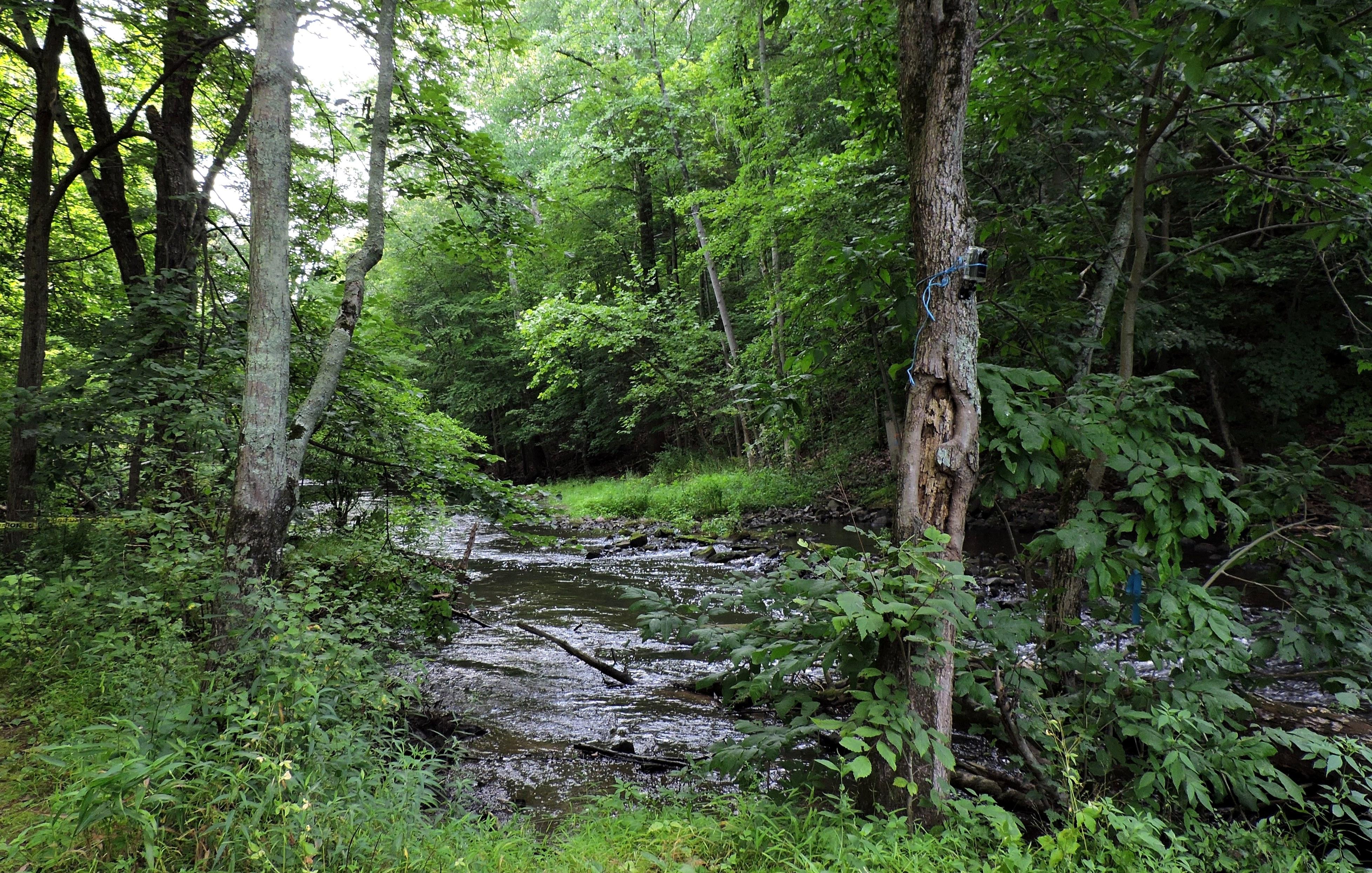 free flowing river - near carpenters dam - laura mcmillan