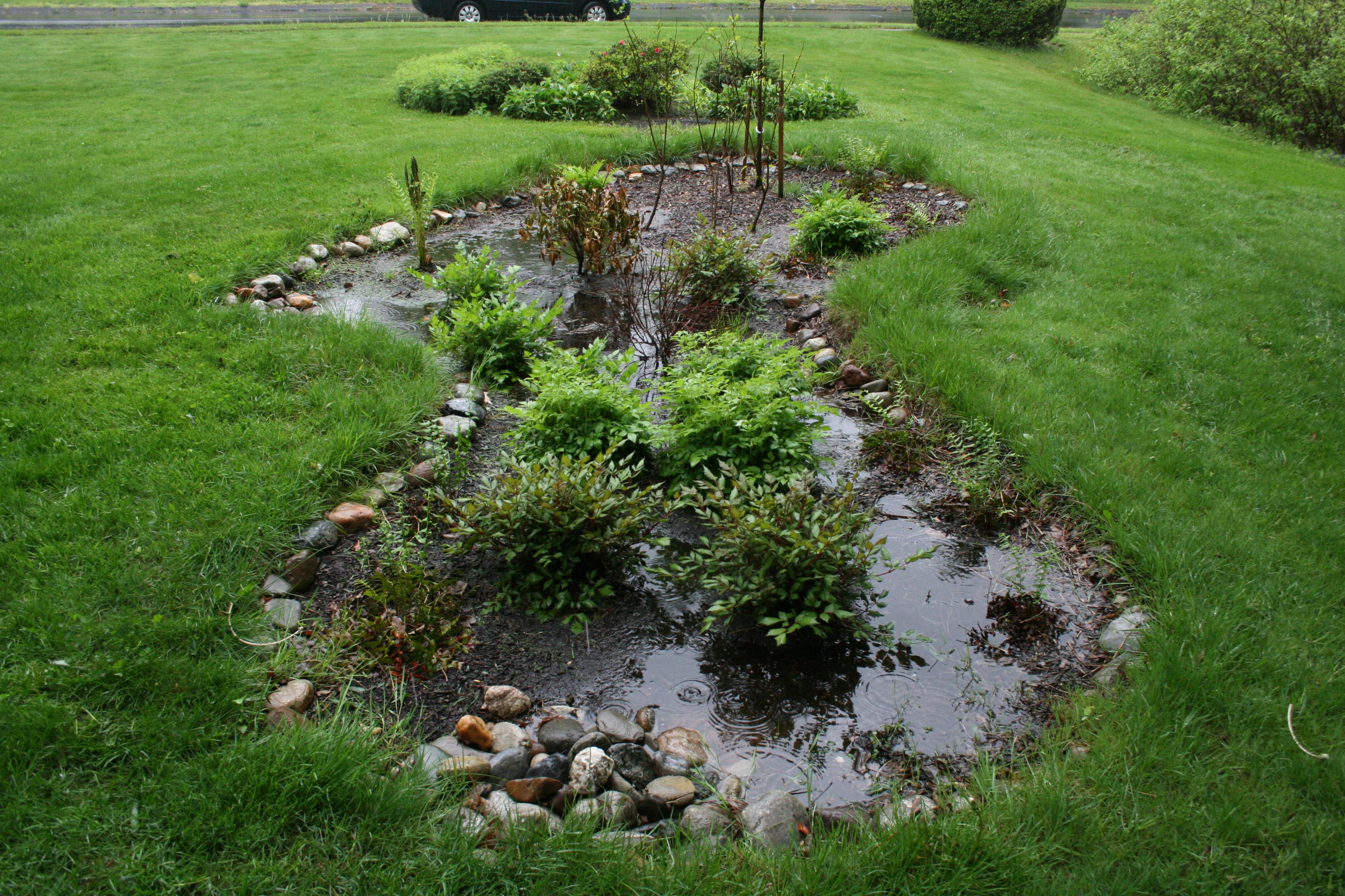 rain garden in use southington