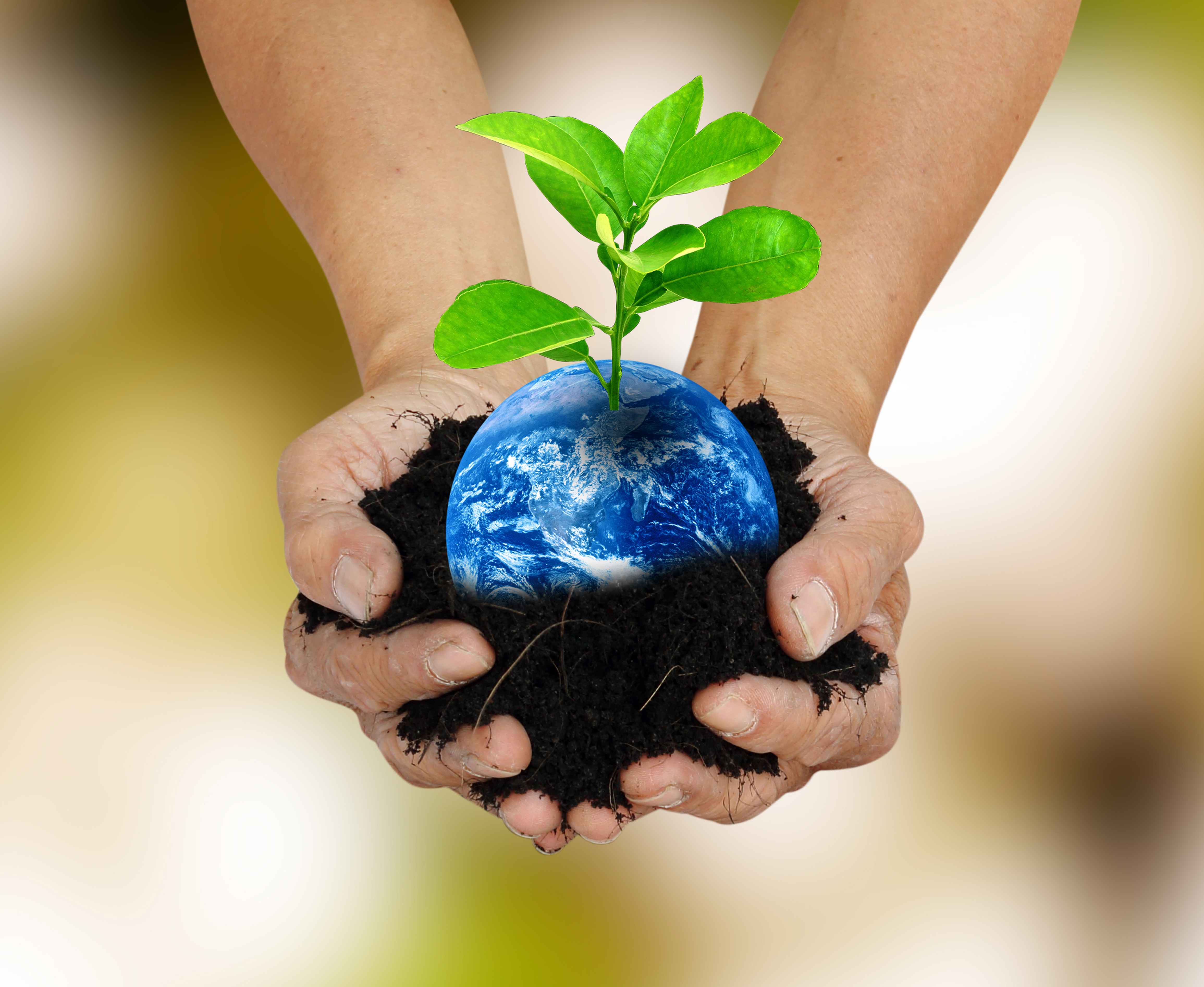 Hands holding plant & Earth shutterstock_273892445 - centered crop