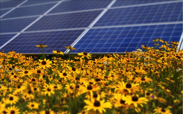 Solar panels with yellow daisies