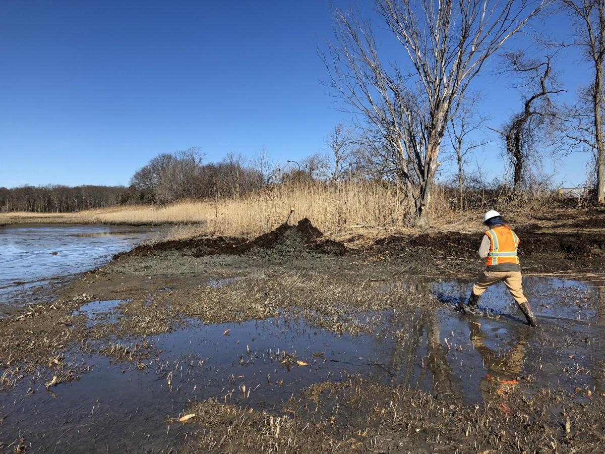 Staff with contractor SumCo, in an orange vest, walks across denuded marsh