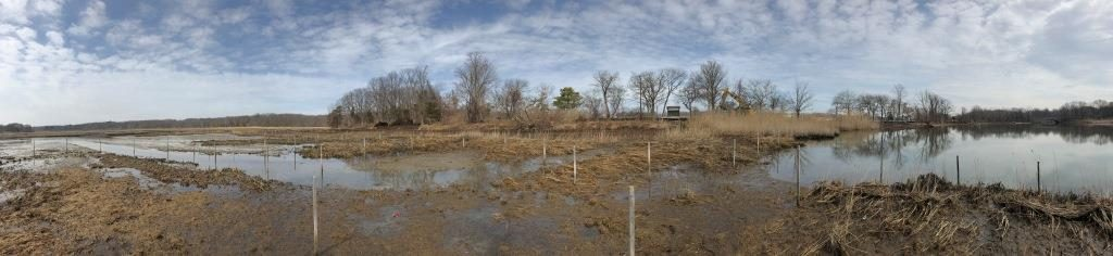 Panoramic of marsh in winter with grasses, water, and trees in distance