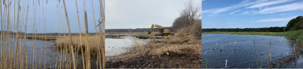 3 images of the same piece of marsh covered in reeds, with heavy machinery digging, and with higher water and reeds gone