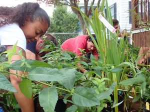 Volunteers plant a rain garden in the Dixwell neighborhood, near the West River in New Haven